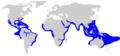 Carcharhinus leucus distmap.png