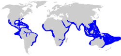 Range of bull shark