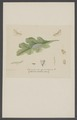 Carcina - Print - Iconographia Zoologica - Special Collections University of Amsterdam - UBAINV0274 003 07 0018.tif