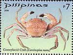 Carcinoplax nana 2008 stamp of the Philippines.jpg