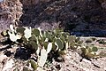 Carlsbad Caverns National Park and White's City, New Mexico, USA - 48345002722.jpg