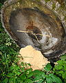 Carpenter ant midden NFUW.jpg
