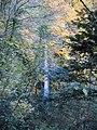 Cascade d'Angon.jpg