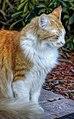 Cat (8228408042).jpg