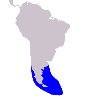 Peale's dolphin - Image: Cetacea range map Black chinned Dolphin