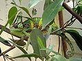 Chameleon-JB-01.jpg