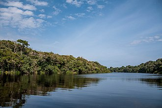 Amazon biome - Anavilhanas National Park, Amazonas, Brazil