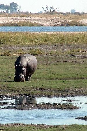 Chobe National Park - Image: Chobe National Park Riverfront Portrait