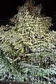 Christkindlmarkt - Swarovski crystal Christmas Tree at Zurich Train Station (Ank Kumar) 07.jpg