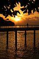 Christmas Island (5774551617).jpg