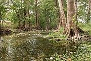 Cibolo Creek Wikipedia
