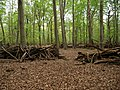 Circle-Barrier in the Hambach forest 02.jpg