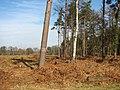 Clearing in Hevingham Park - geograph.org.uk - 1198925.jpg