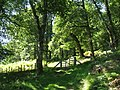 Coed Dolmelynllyn woodlands - geograph.org.uk - 533886.jpg