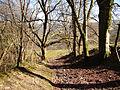 Coed Troedrhiwseiri - geograph.org.uk - 695776.jpg