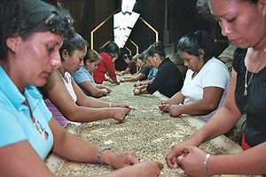 Ahuachapán - Green Coffee processing in Ahuachapan