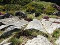 Columns of volcanic rock on Garn Fawr - geograph.org.uk - 537917.jpg