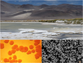 """Compound image from """"Functional Green-Tuned Proteorhodopsin from Modern Stromatolites"""".png"""