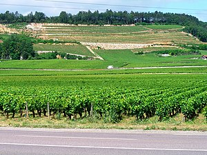 Deutsch: Weinbau an der Côte-de-Nuits