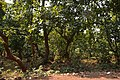 Countryside - Dandadhar - Dhenkanal 2018-01-25 9358.JPG