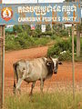 Cow under Cambodian People's Party Sign - Kampot - Cambodia.JPG