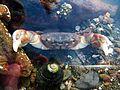 Crab - Flickr - GregTheBusker (1).jpg