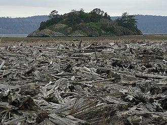 Fir Island (Washington) - Driftwood deposited by Skagit River floodwaters on the Fir Island shore