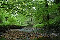 Crawfordsburn Glen near Bangor (14) - geograph.org.uk - 555598.jpg