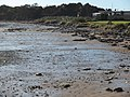 Crayfish Creek beach 20190722-006.jpg