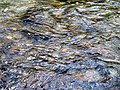 Creek Black Mountain Campground Pisgah Nat Forest NC 4424 (37894595356).jpg