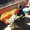 Cucurbita pepo Ornamental Gourds - Three Gourds at Work.jpg