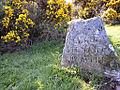 Culloden grave (Stewart of Appin).jpg