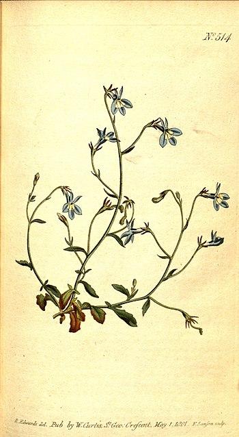 Curtis's_botanical_magazine