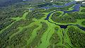 Curvas do Parque Nacional de Anavilhanas.jpg