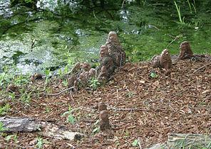Cypress knee taxodium distichum 20060521.jpg