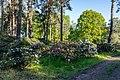 Dülmen, Welte, Rhododendronwald -- 2020 -- 6906.jpg