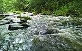 Dūkštos upelis - panoramio.jpg