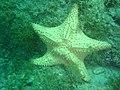 DSC00066 - estrela do mar - Naufrágio e recifes de coral no Nilo.jpg