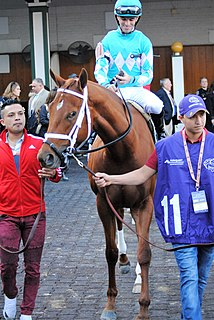 Monomoy Girl American Thoroughbred racehorse