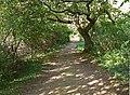 Dappled sunlight in Hambleton Wood - geograph.org.uk - 1002226.jpg