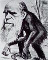 Darwin ape2.jpg