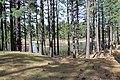 Davis Creek Park - panoramio (22).jpg