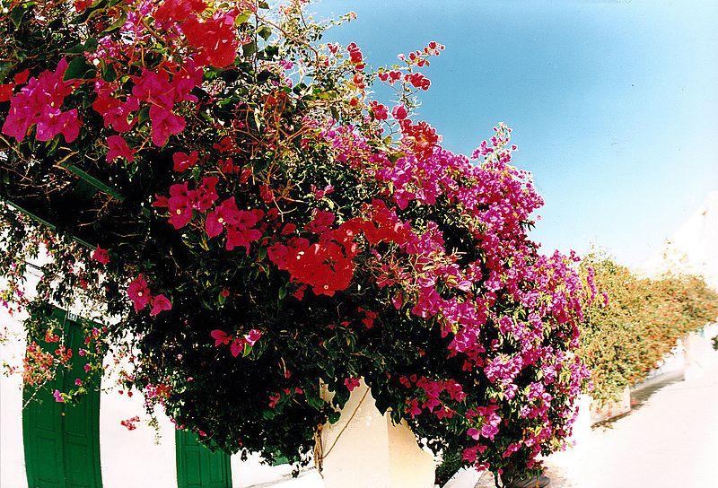 File:December Haria - Lanzarote Photography 1987 - panoramio.jpg