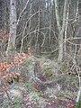 Deer track, Blawearie Wood. - geograph.org.uk - 142626.jpg
