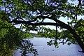 Deininger Weiher - geo.hlipp.de - 11588.jpg