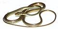 Dendrelaphis marenae - ZooKeys-266-001-g083.jpg