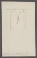 Dentalium coarctatum - - Print - Iconographia Zoologica - Special Collections University of Amsterdam - UBAINV0274 081 10 0006.tif