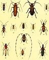 Der Käferfreund. Praktische Unleitung zum Sammeln und Bestimmen der Käfer ((1896)) (20836361246).jpg