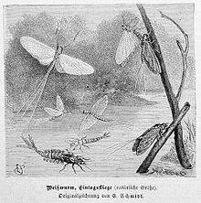 Insect - Wikiquote