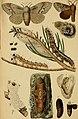 Die Waldverderber und ihre Feinde - ein handbuch für Forstmänner, Landwirthe, Gärtner und alle mit Waldbäumen Beschäftigte (1876) (20328107434).jpg